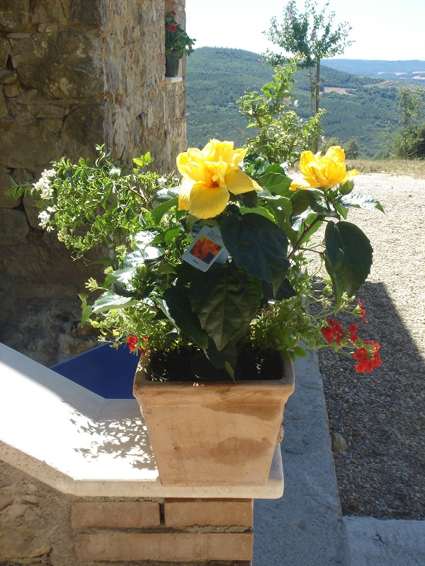 Bisconti-Italië-tuinieren-in-een-pot (4)