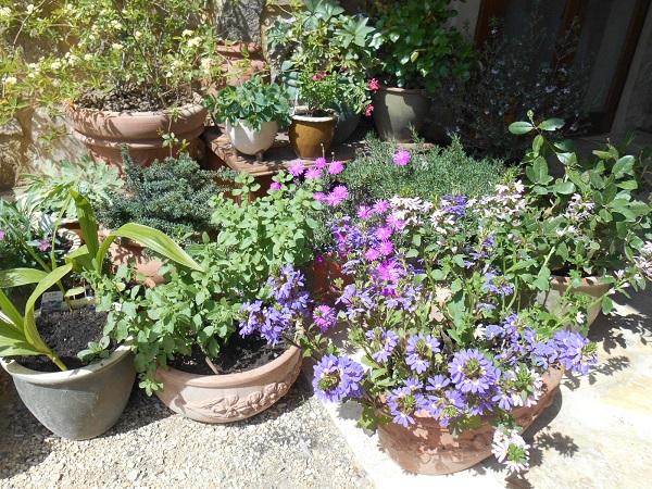 Bisconti-Italië-tuinieren-in-een-pot (5)