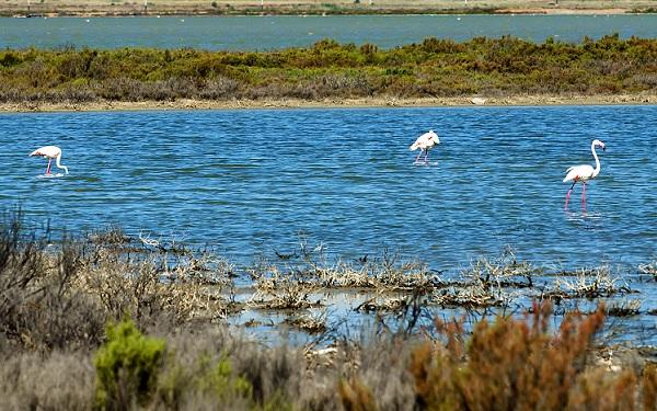 Cagliari-flamingo