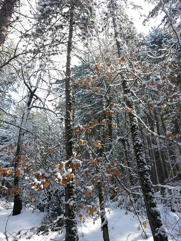 Calabrië-winter-sneeuw-Italian-Storytellers (3)