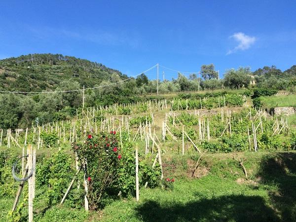 Camping-Dolce-Acqua-Levanto-Ligurië (4)
