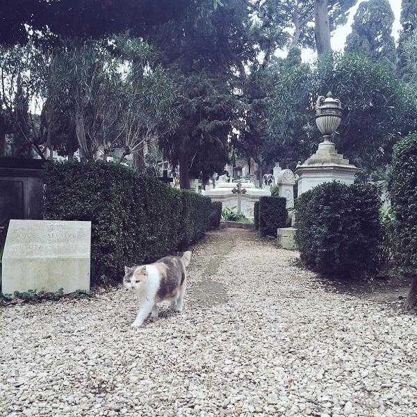 Campo-Cestio-begraafplaats-Rome-Testaccio (2)