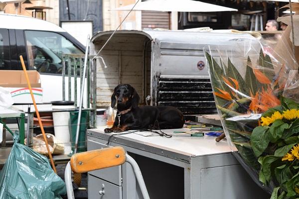 Campo-de-Fiori-markt-Rome (8)