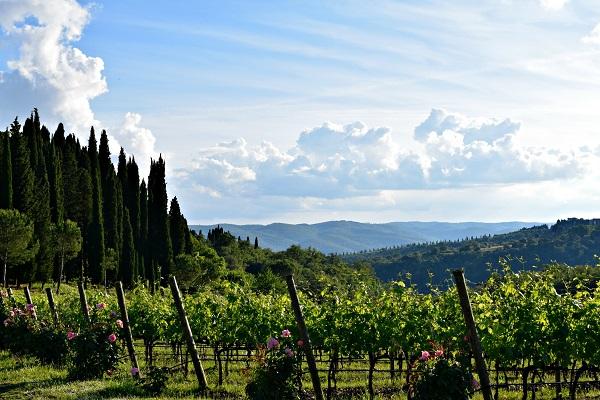 Castello-Albola-Chianti (2a) (2)