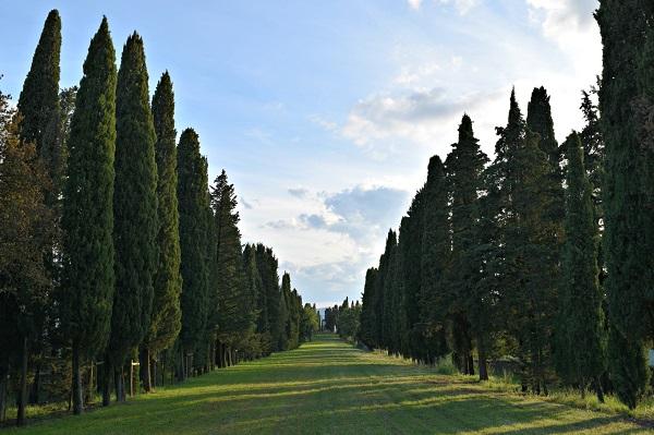Castello-Albola-Chianti (2a) (3)