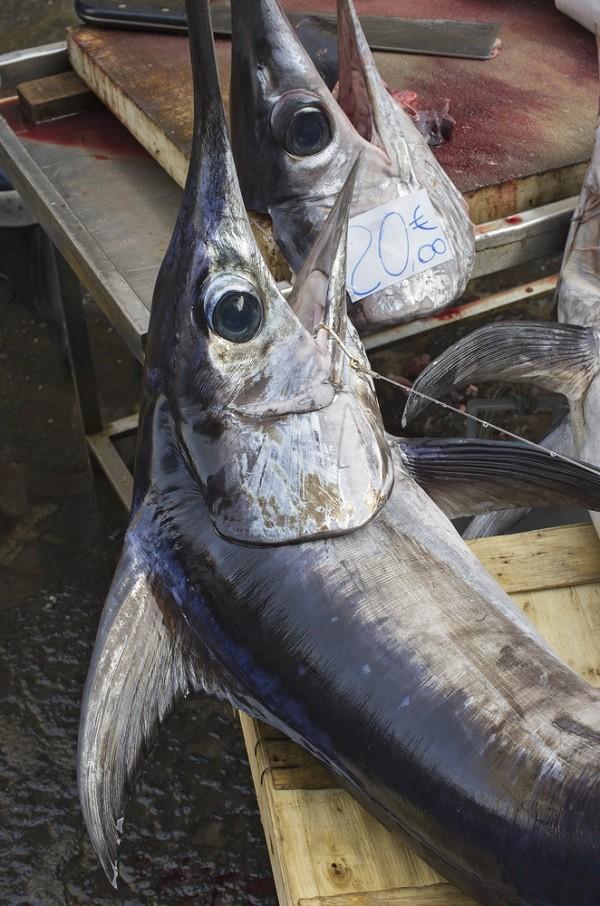 Catania-vismarkt (2)