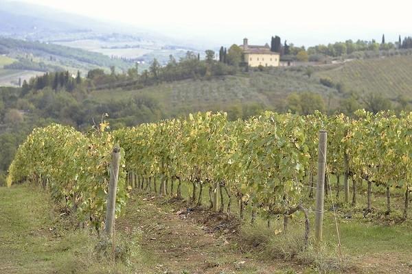 Chianti-Toscane-Inge-van-Beekum (2)