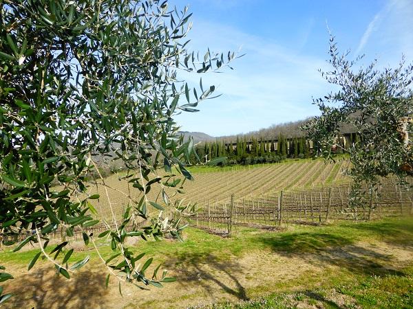 Chianti-Toscane-wijngaarden (1)