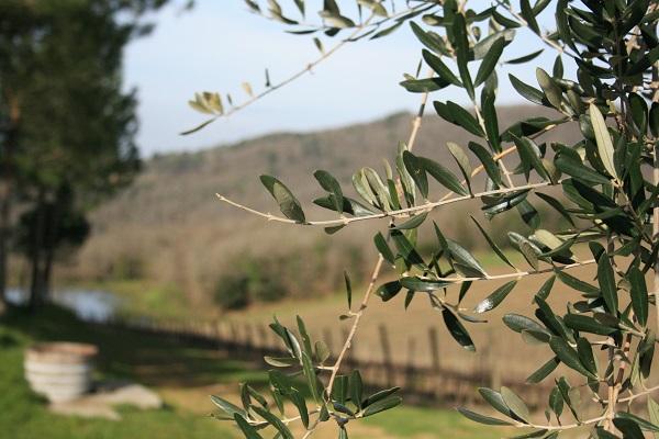 Chianti-Toscane-wijngaarden (2)