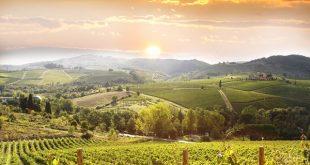 Chianti-wijngaarden-Toscane-Toccafondi (1)