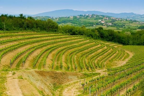 Collio-Friuli-Venezia-Giulia (2)