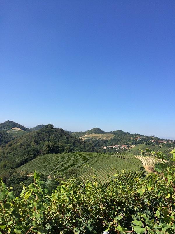 Cossetti-wijn-Piemonte (19)