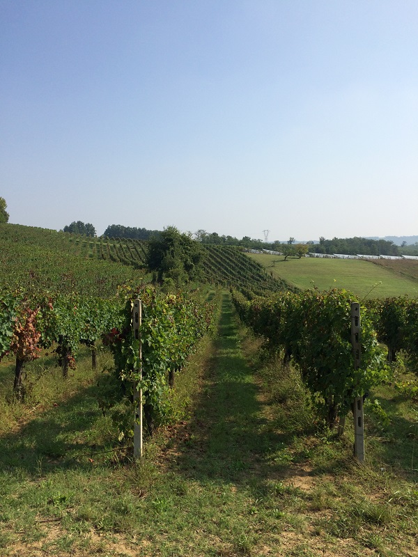 Cossetti-wijn-Piemonte (24)