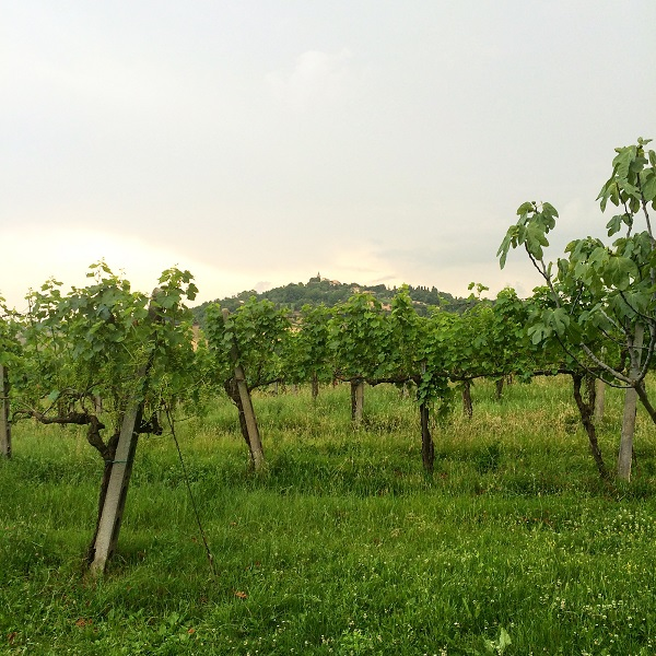 Countryhouse-Montesoffio-Le-Marche (3)