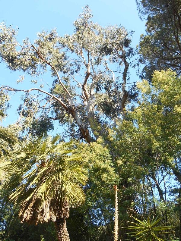 Elba-bezoek-botanische-tuin (10)