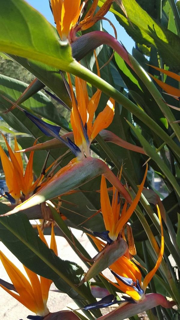 Elba-bezoek-botanische-tuin (6)