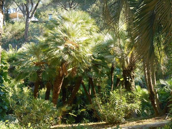 Elba-bezoek-botanische-tuin (8)