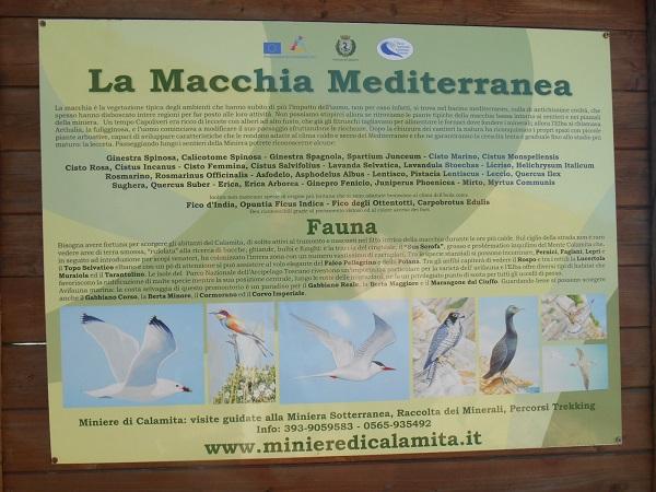 Elba-macchia-mediterranea