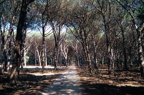 Feniglia-Toscane-1