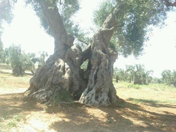 Ferriprojects-Puglia (1)
