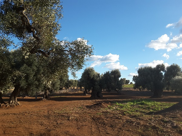 Ferriprojects-Puglia (4)