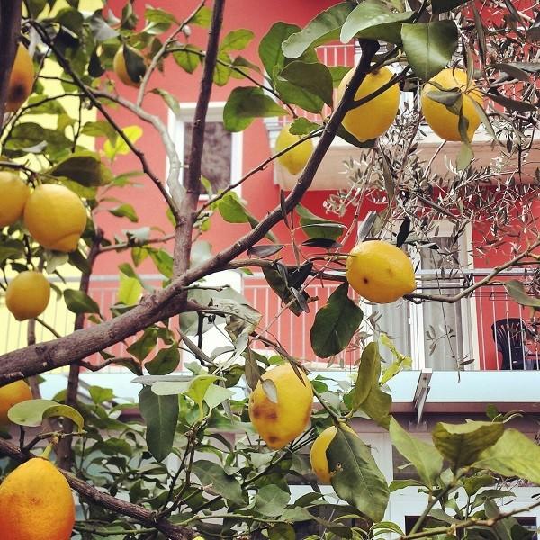 Gardameer-citroenen-Limone