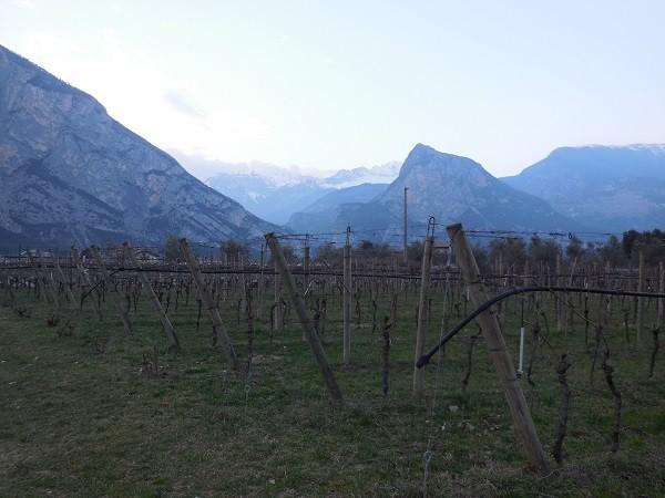 Gardameer-wijn (5)