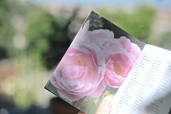 Giardino-delle-Rose-Florence-Inge-van-Beekum (4)