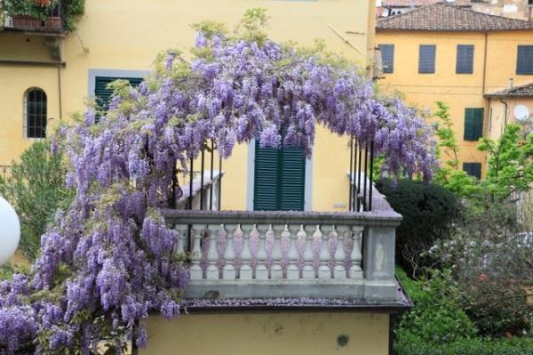 Green-Lucca-Verde-Cora-Konings (5)