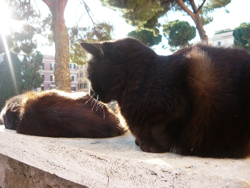 Kattenforum 2