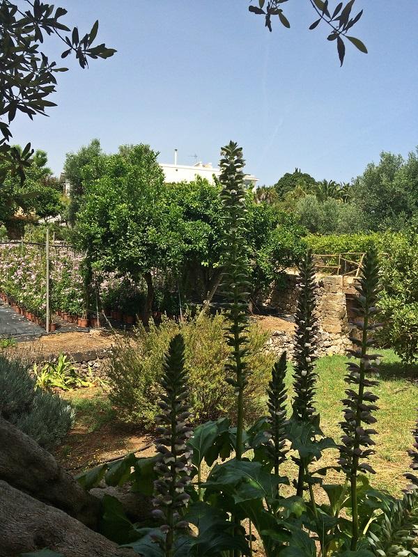 Lama-degli-Ulivi-Puglia (1)