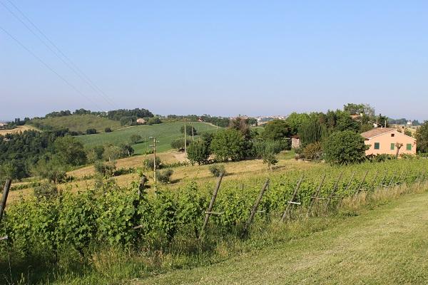 Le-Marche-Corinaldo (4)