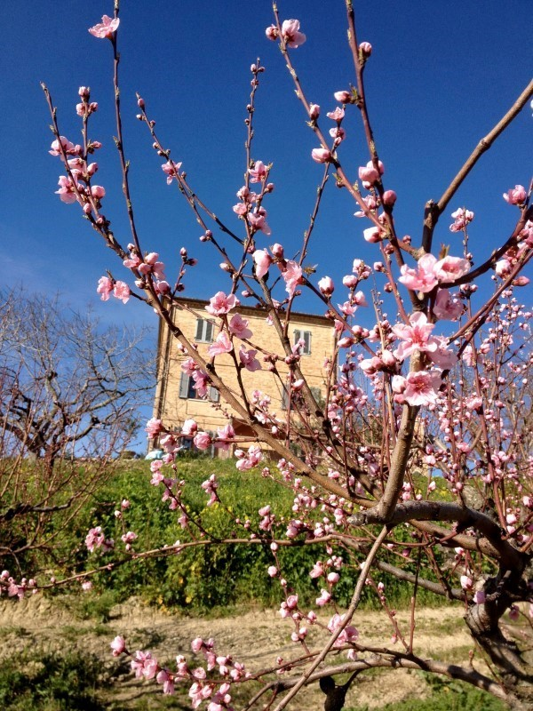 Le-Marche-Villa-Moltini (1)