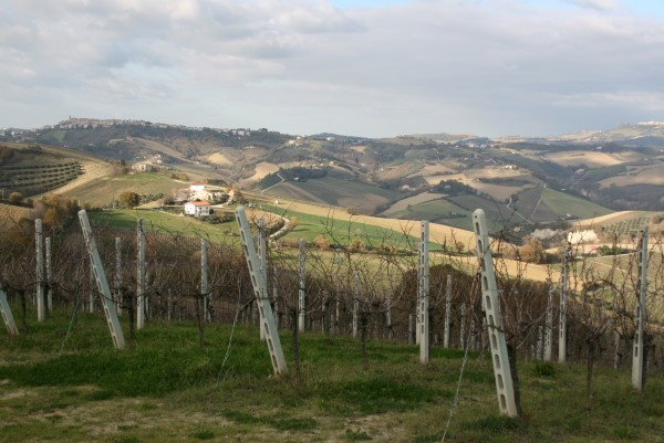 Le-Marche-Villa-Moltini (5)