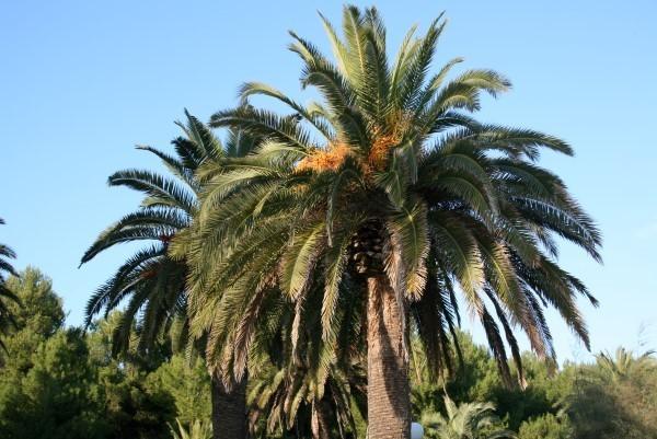 Le-Marche-Villa-Moltini (7)