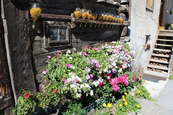 Livigno-bloemen