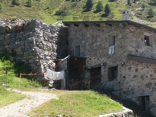 Livigno-mountainbiken-bergen (23)