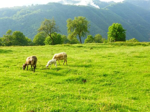 Locanda-del-Moro-Toscane (9)