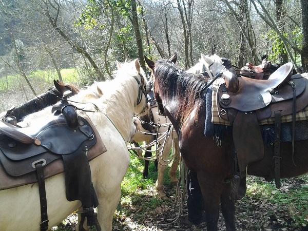 Maremma-paardrijden (1)