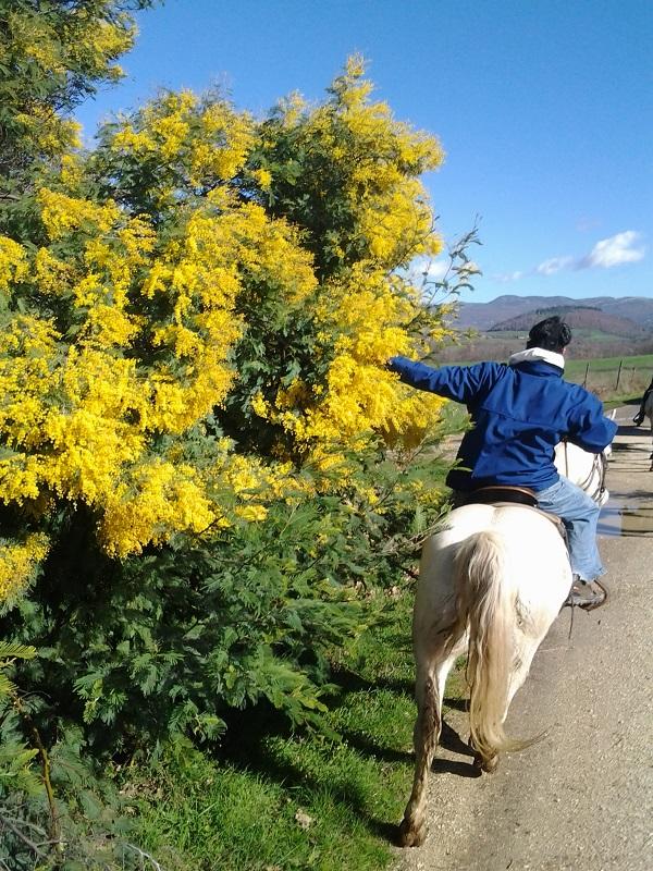 Maremma-paardrijden (2)