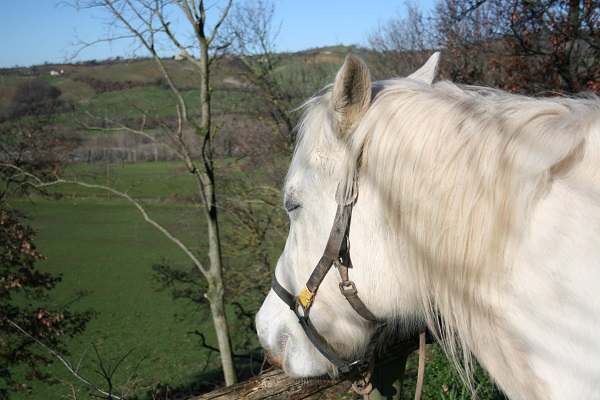 Maremma-paardrijden (7)