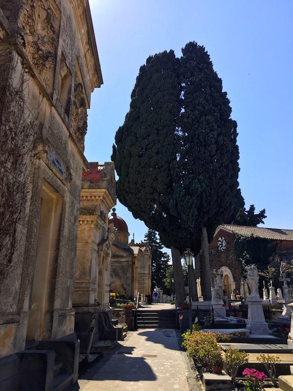 Mascalucia-cimitero-8