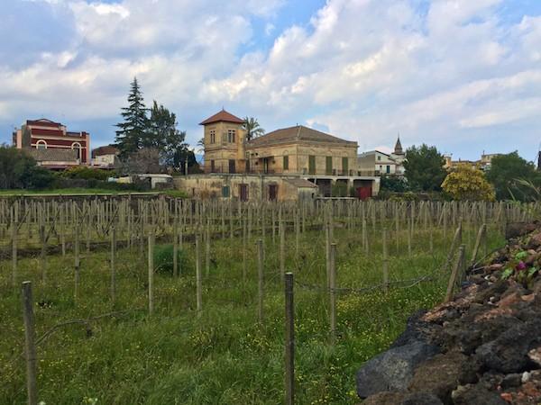 Mascalucia-wijngaard