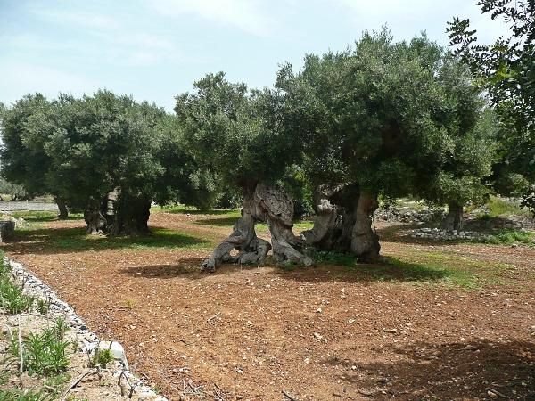 Masseria-Spina-Resort-Monopoli-Puglia (6)