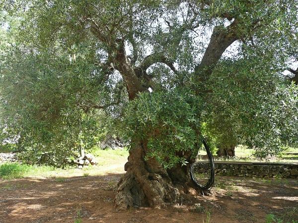 Masseria-Zacceria-Puglia (4)