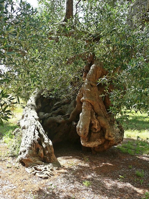 Masseria-Zacceria-Puglia (5)