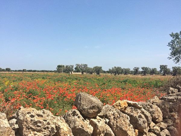 Masseria-Zacceria-Puglia (7)