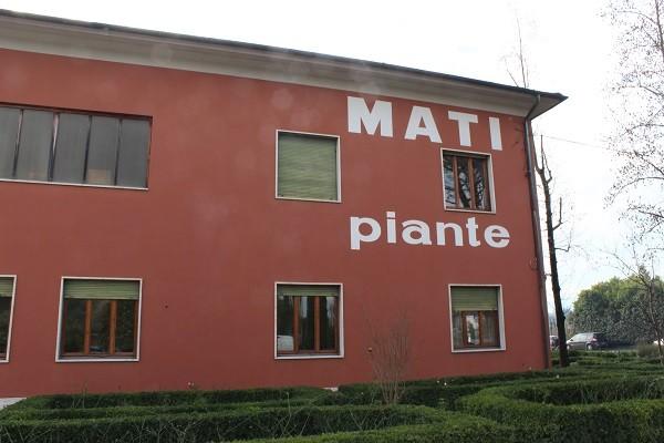 Mati-Piante-Pistoia (1)