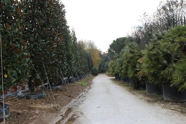 Mati-Piante-Pistoia (11)