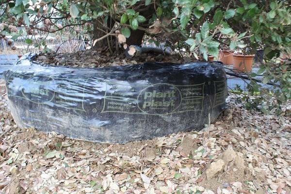 Mati-Piante-Pistoia (12)